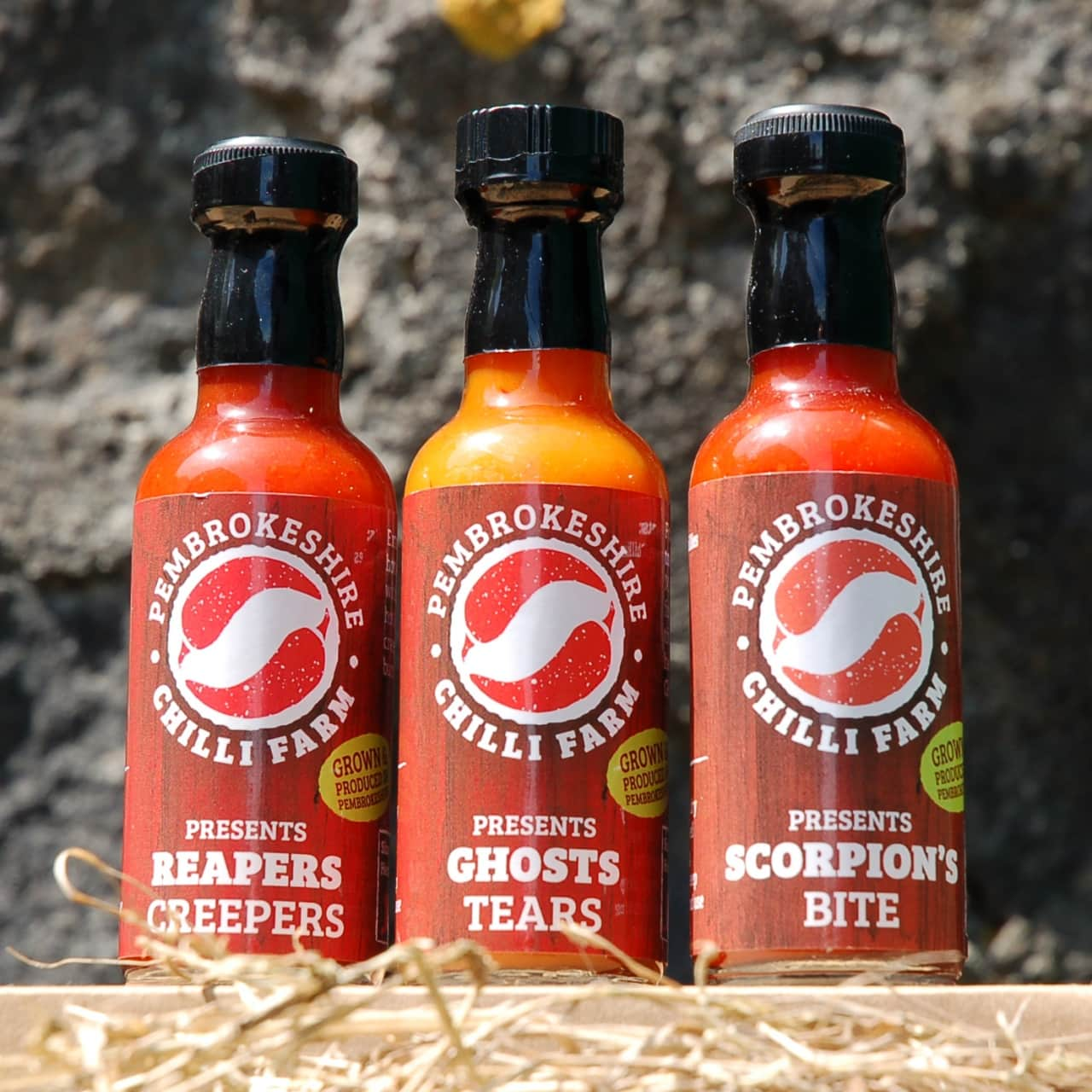 Pembrokeshire Chilli Farm Graphic Design Case Study