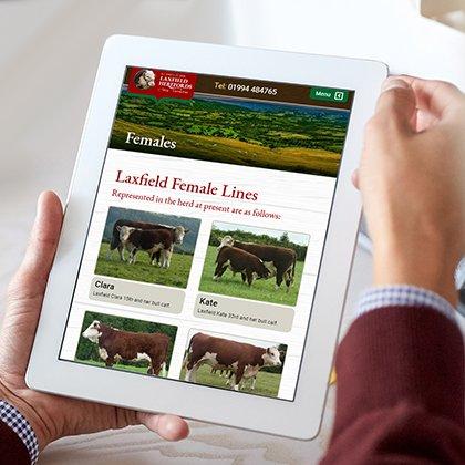 Website designers Pembrokeshire