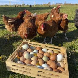 Egg box labels designed Pembrokeshire Tenby Narberth Haverfordwest